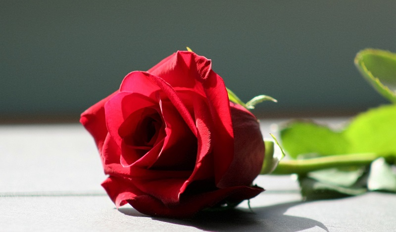 Vrei sa ii faci o surpriza memorabila de Dragobete? Apeleaza la o florarie online cu experienta!
